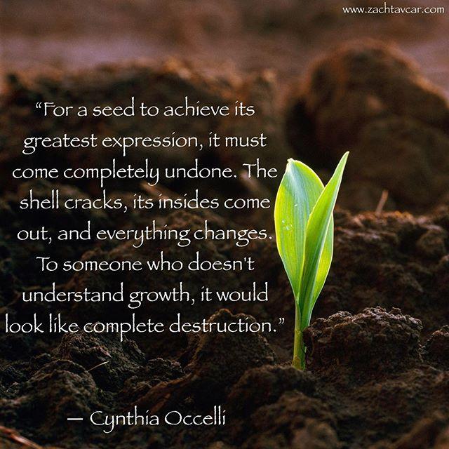 Seed Cynthia Occelli